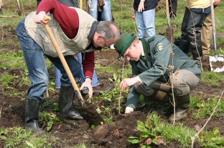 Meck-Pomm: Bäume statt Böller – 100 Jahre Natur statt zehn Sekunden Effekt