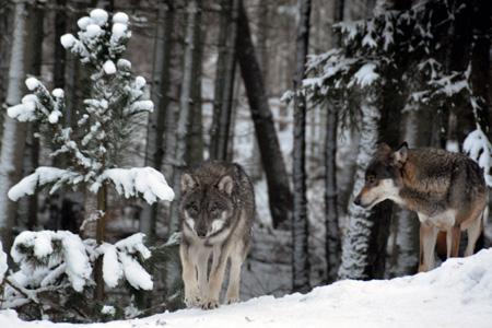 Winterwanderungen im Wildpark Eekholt