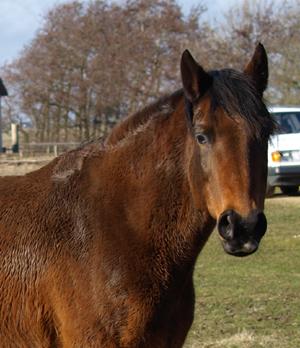 Guten Appetit! Pferdefleisch-Panscherei und Aflatoxin-Futtermittel nun auch in Schleswig-Holstein