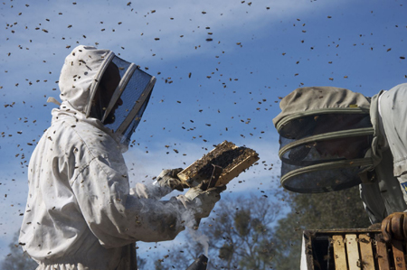 FilmClub Heide: More than Honey: Ein Bienen-Film, der zu denken gibt