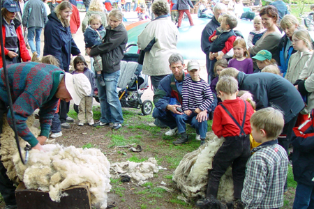Von der Wolle zum Filz – Wildpark Eekholt in Aktion