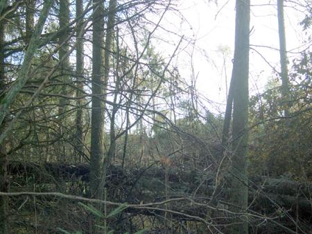 Kaum zu glauben! Waldbetretungsverbot ab sofort wieder aufgehoben