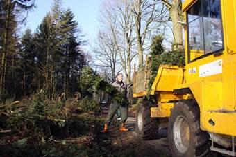 Sturmschäden Christian und Xaver – Aufräumen im Wald mit Mehrwert für den Küstenschutz