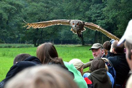Wildpark Eekholt! Mit falknerischen Flugprogramm Start in die Frühjahrssaison
