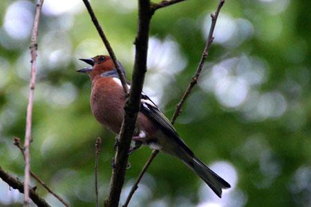 Vogelkundliche Wanderung durch den erwachenden Wildpark Eekholt