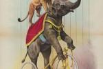 Elefant_Loewe_c_StichtingCi