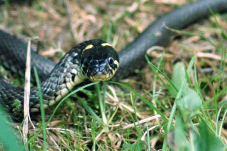 Wildpark Eekholt: O schaurig ist´s übers Moor zu gehn