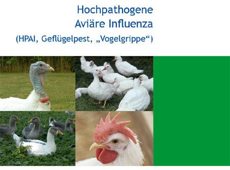 Schutz vor Geflügelpest: Schleswig-Holsteins Landwirtschaftsministerium trifft zusätzliche Vorsorgemaßnahmen