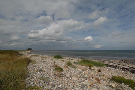 """Große Bedeutung für die Vogelwelt an der Ostsee: Naturschutzgebiet """"Kleiner Binnensee und angrenzende Salzwiesen"""""""