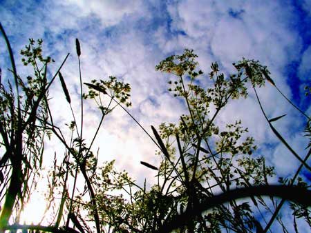 Getreideernte: Hohe Hektarerträge beim Wintergetreide