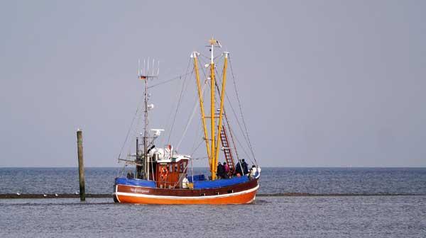 EU-Fischerei-Minister einigen sich auf neue Fangquoten für die Ostsee