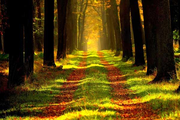Neues 218 Hektar großes Naturschutzgebiet im Kreis Segeberg und Kreis Stormarn