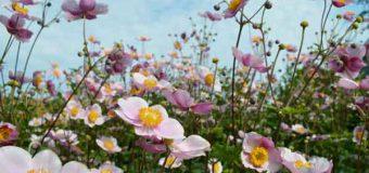 Neue Bepflanzung an der Stadtbucht in Eutin