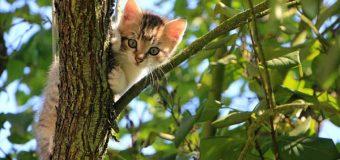 Freilebende Katzen können wieder kastriert werden
