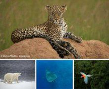 Naturwunder Erde: Eine Weltreise voller Bilder, Erlebnisse und Musik