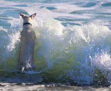 Urlaub an der Nordsee entspannt mit dem Hund