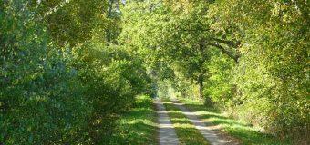 Kreis Dithmarschen nimmt neuen Anlauf für die Ausweisung von Landschaftsschutzgebieten