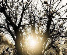 Warnung vor Dürreschäden in den Forsten Schleswig-Holsteins