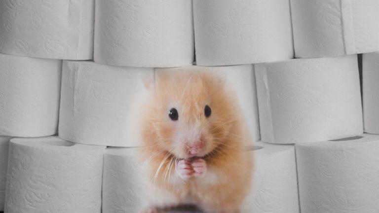 Hamsterkäufe nehmen weiter zu