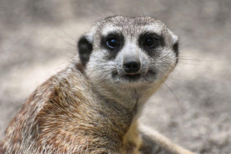 Corona-Pandemie: Soforthilfe des Landes für Umwelteinrichtungen und Tierparks startet