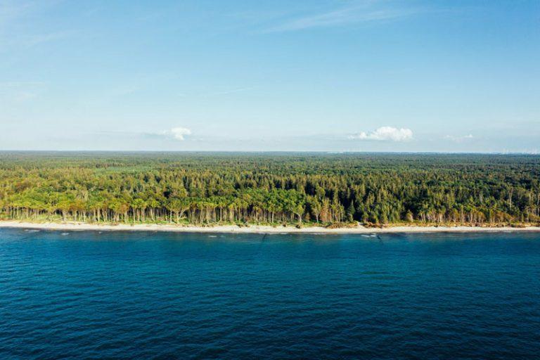 Rostocker Heide – Deutschlands größter Küstenwald ist ein Geheimtipp