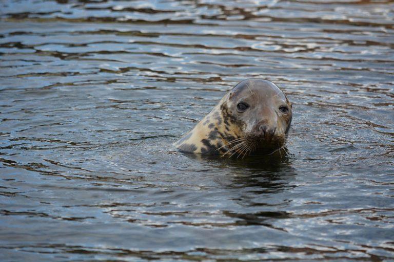 Seehundstation Friedrichskoog öffnet in einem Teilbereich wieder für Besucher