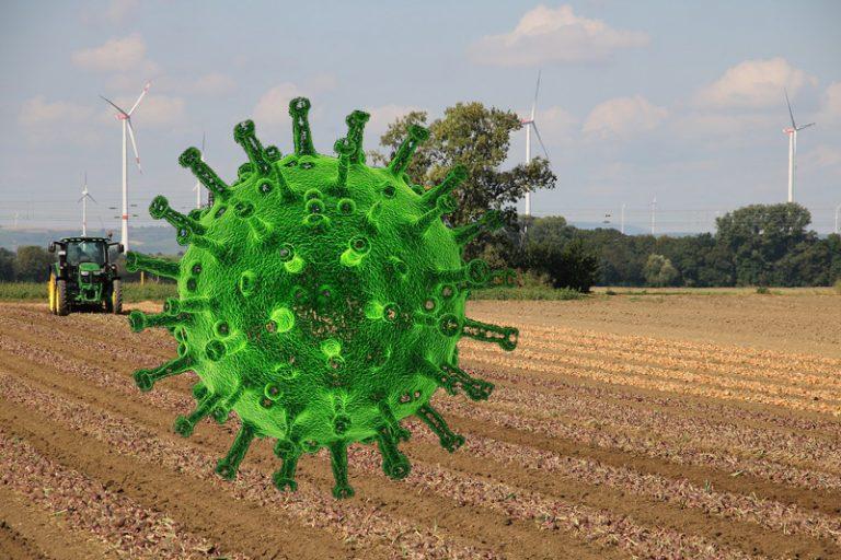 Kreis Dithmarschen: Inzidenzwert von 35 Neuinfektionen auf 100.000 Einwohner*innen … überschritten
