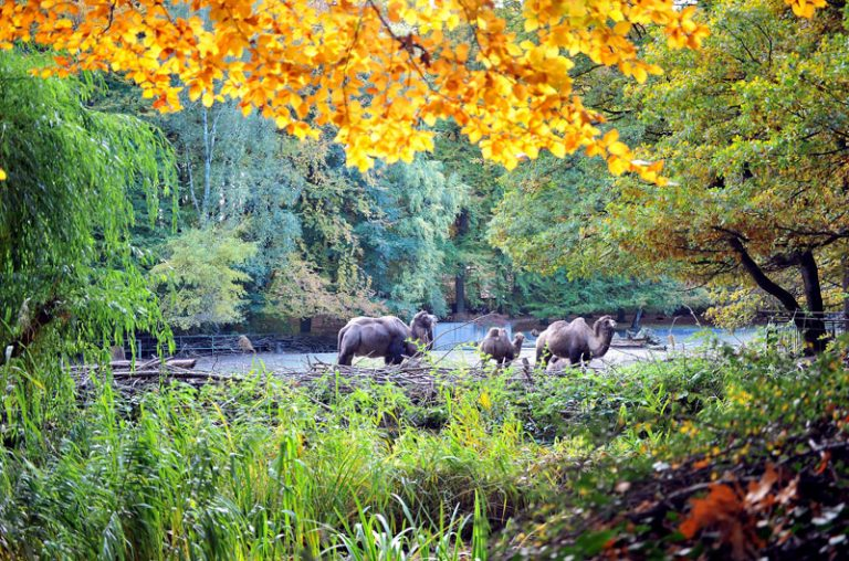 Zoo Rostock bleibt im November geöffnet