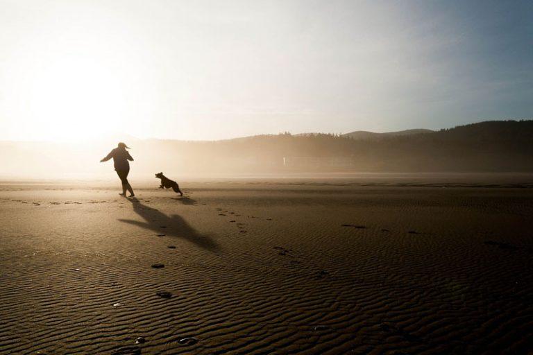 Strandurlaub mit Hund: Darauf sollten Reisende achten